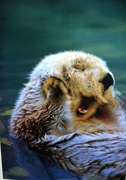 Not on Pinterest? You Otter Be (get it?)